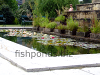 Fish pond, resized image 1