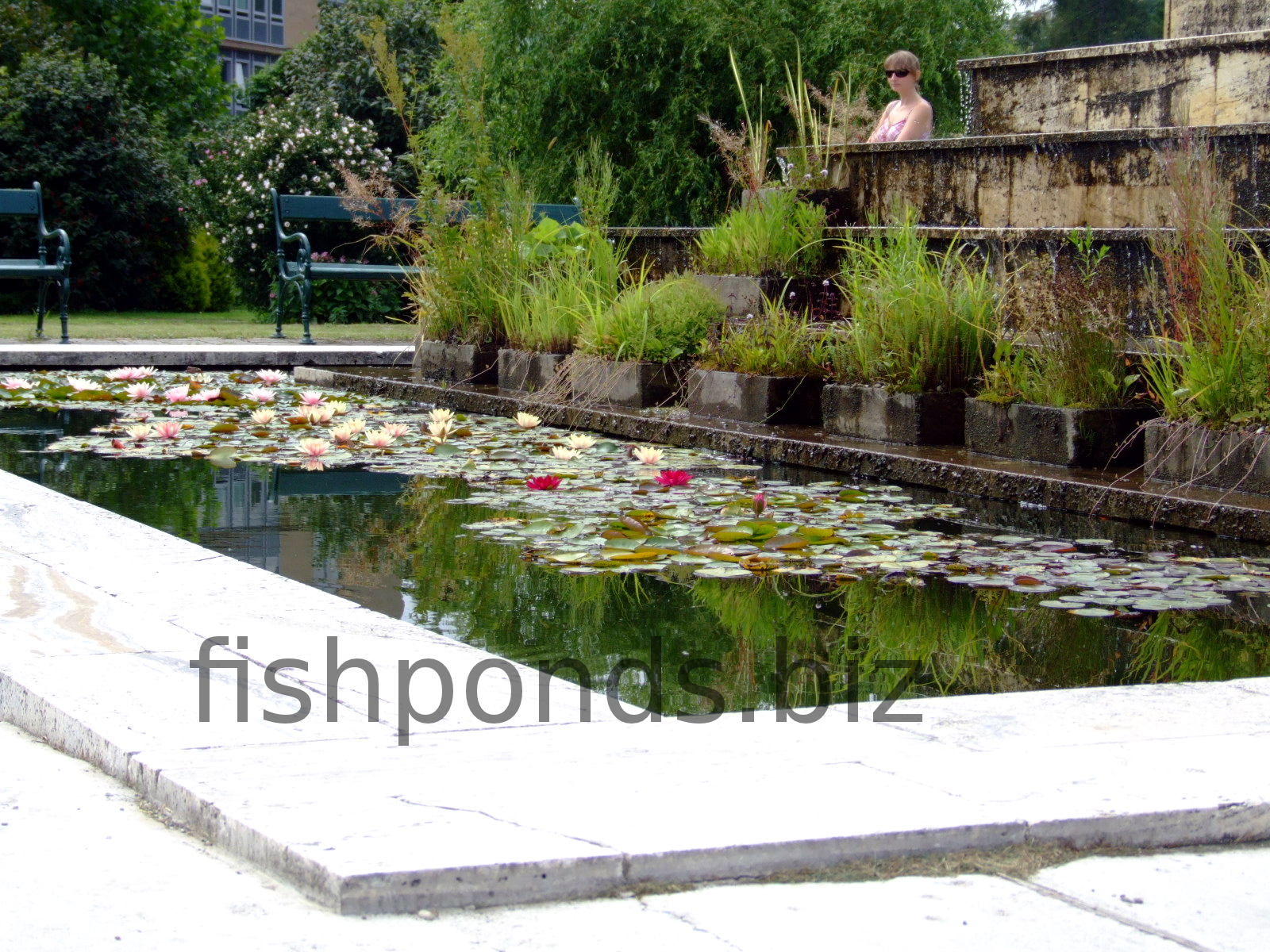 How to build your fish pond for Square fish pond