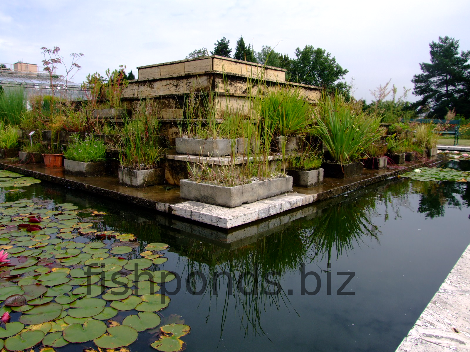 how to build your fish pond