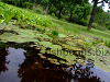 Fish pond with plants, resized image 1