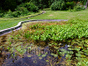 Fish pond with plants, resized image 2