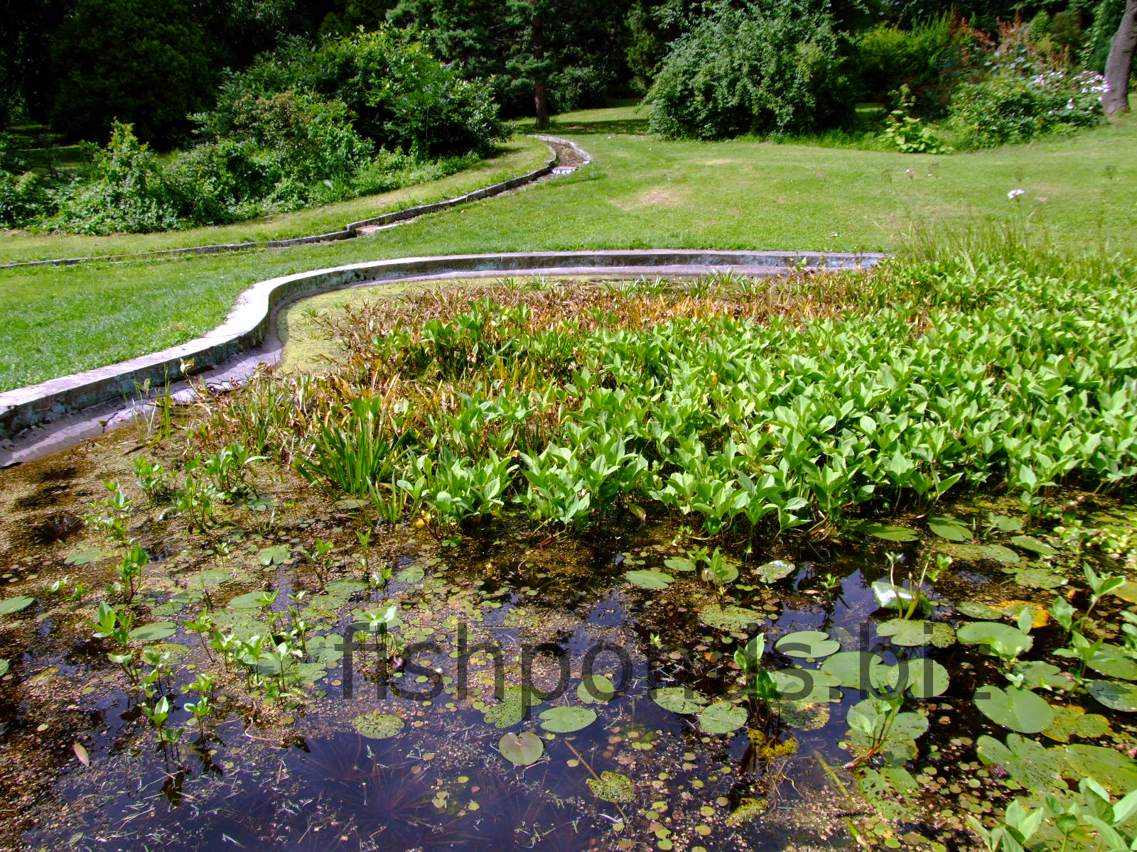Fish pond design ideas for Fish suitable for small pond
