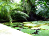 Fish pond with plants, resized image 3