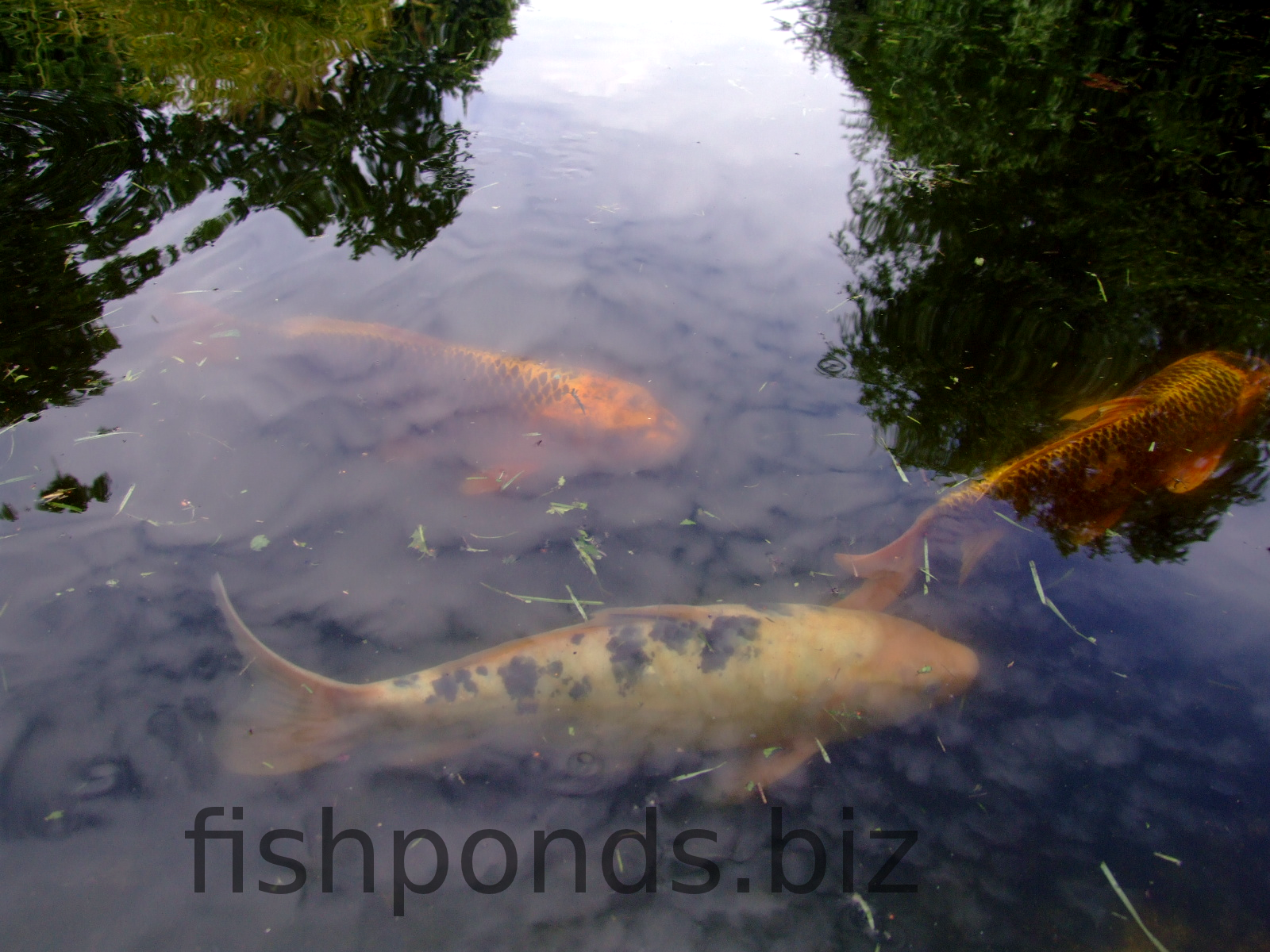 Stocking your fish pond for Stocked fishing ponds