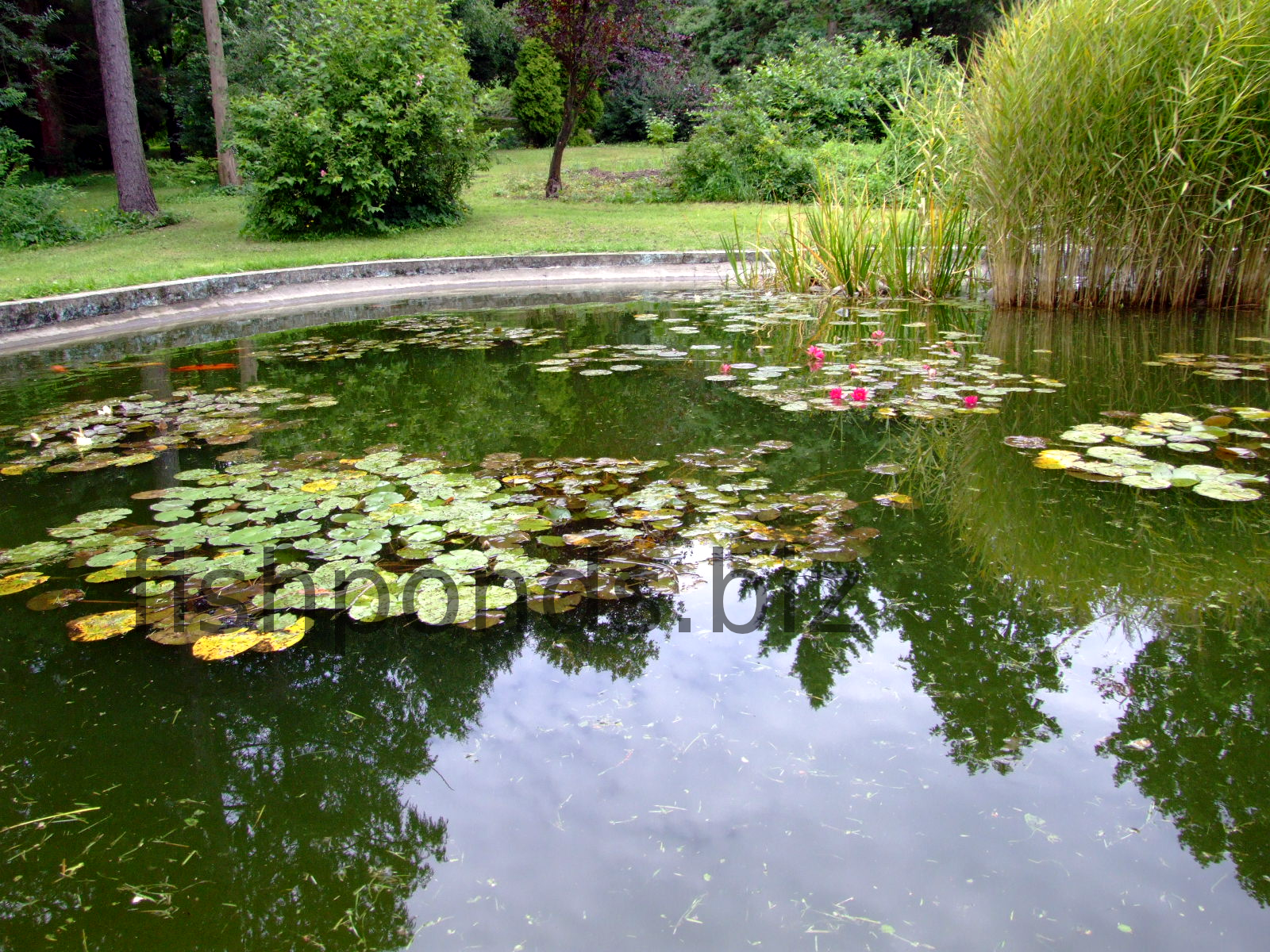 Fish pond design ideas for Koi carp pond design