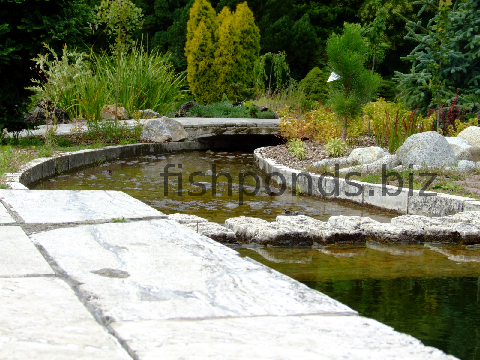 Fish pond design ideas for Types of pond design