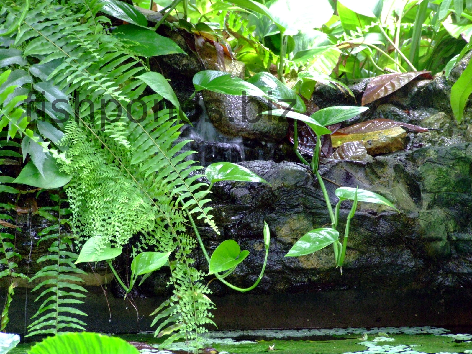 Fish pond design ideas for Koi pond shade ideas